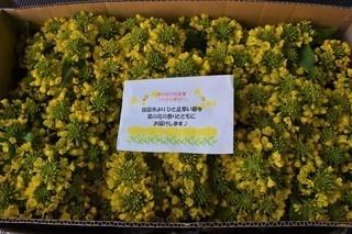 菜の花忌.jpg